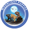 Moonlight Puppies